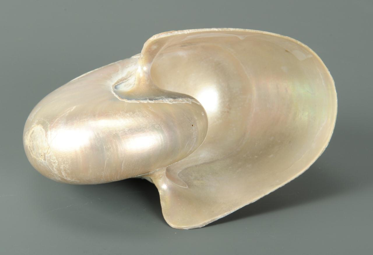 Lot 615: Spanish American War Shell, 1st Tennessee Co. C