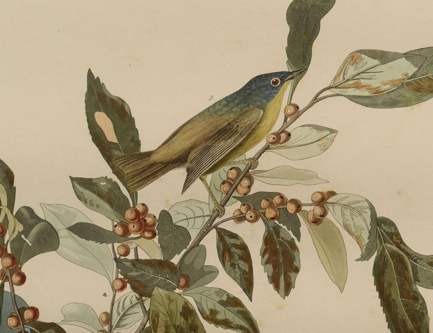 Lot 540: Audubon Print: Nashville Warbler