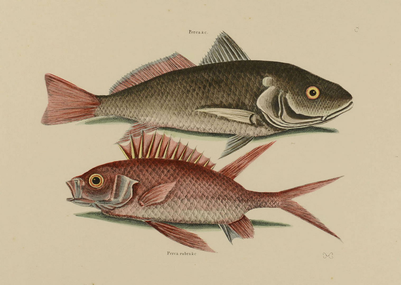 Lot 541: Grouping of Early Colored Engravings, 4 total