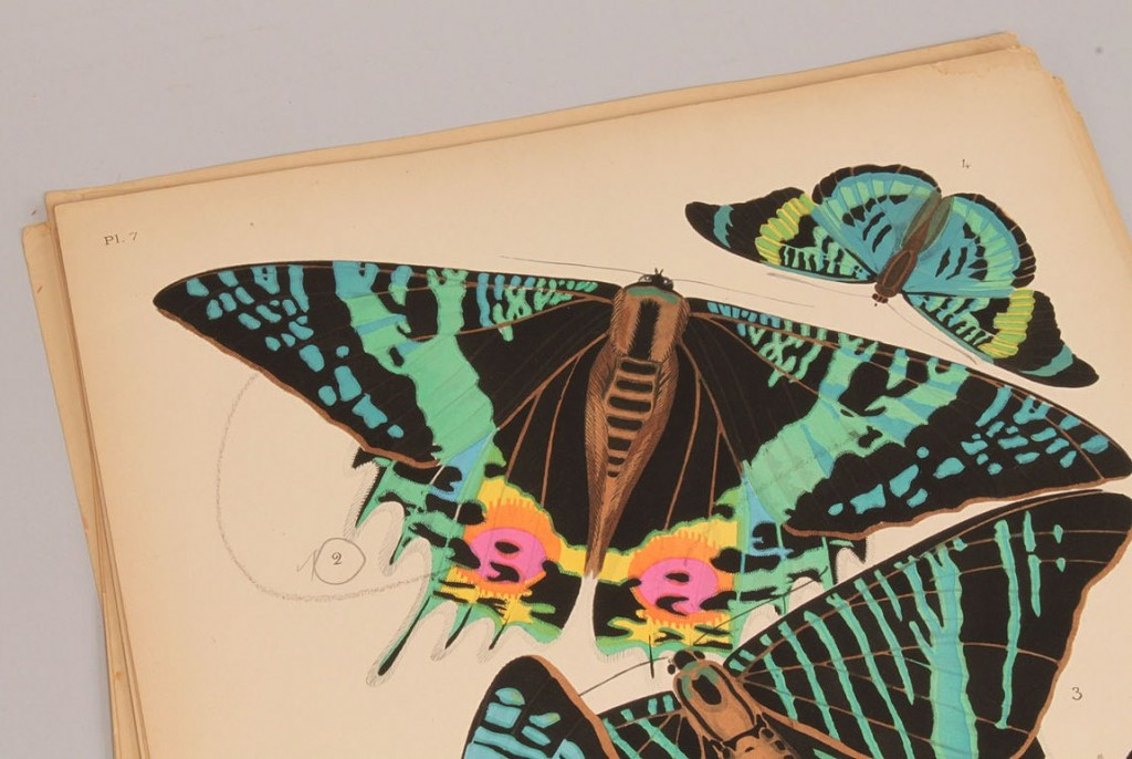 Lot 154: E. A. Seguy portfolio, Papillons