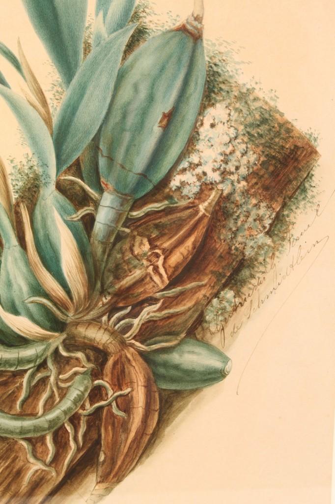 Lot 467: Lot of 3 Botanical Lithographs