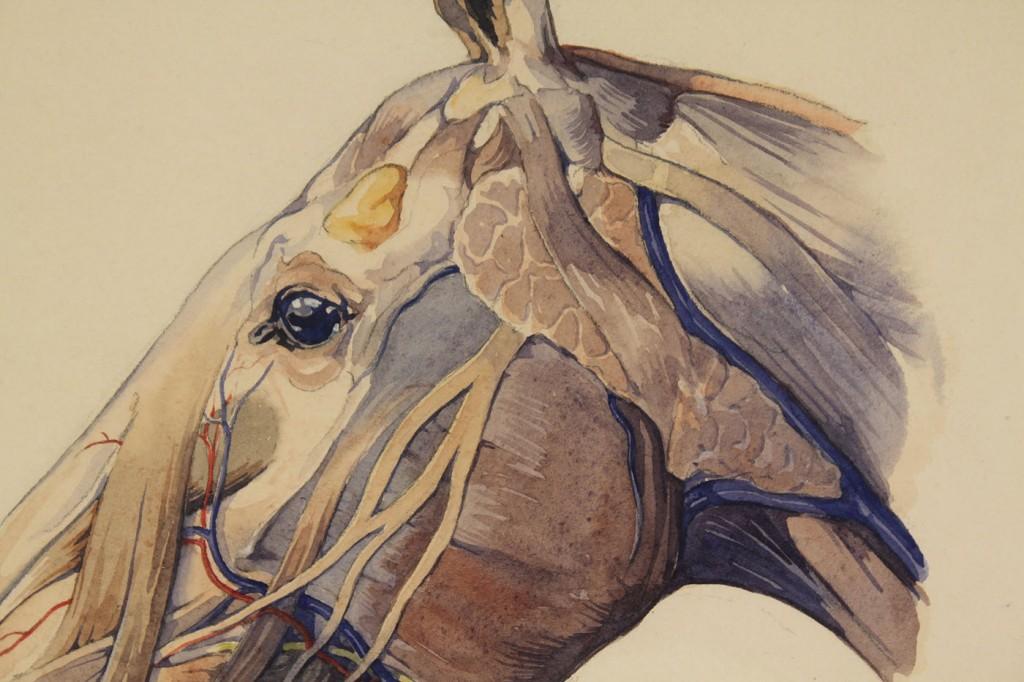 Lot 416: 2 Horst Schreck Watercolors