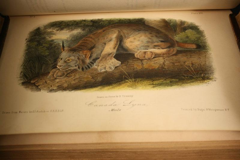 Lot 484: Set of 10 Audubon books, Octavo Birds & Quadrupeds