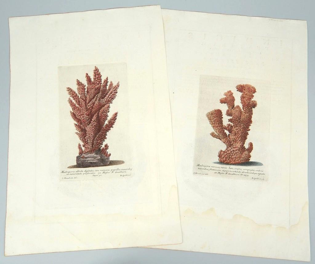 Lot 491: 2 Nicolai Gualtieri colored coral engravings