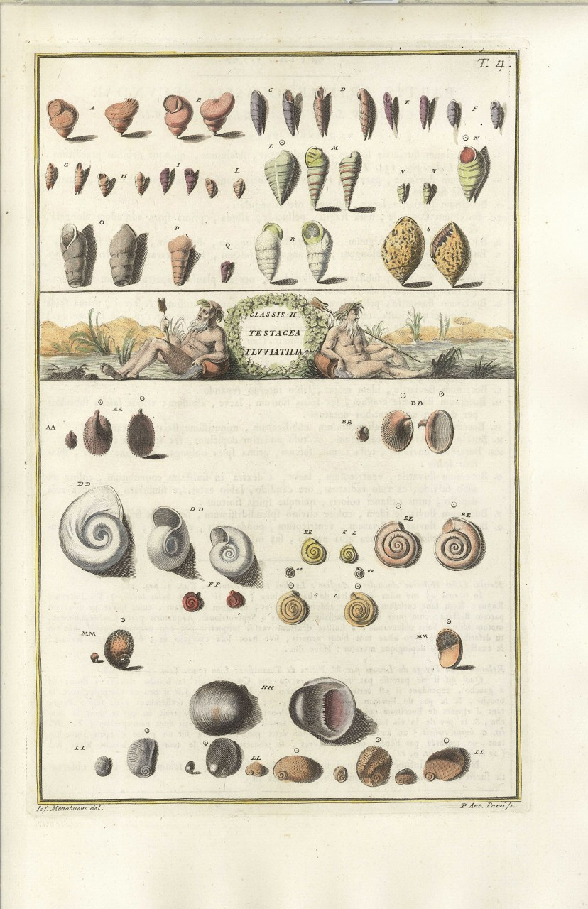 Lot 492: 3 Menabuoni hand colored shell engravings
