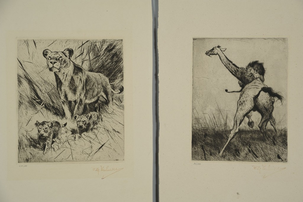 Lot 527: 3 Wilhelm Kuhnert lion prints
