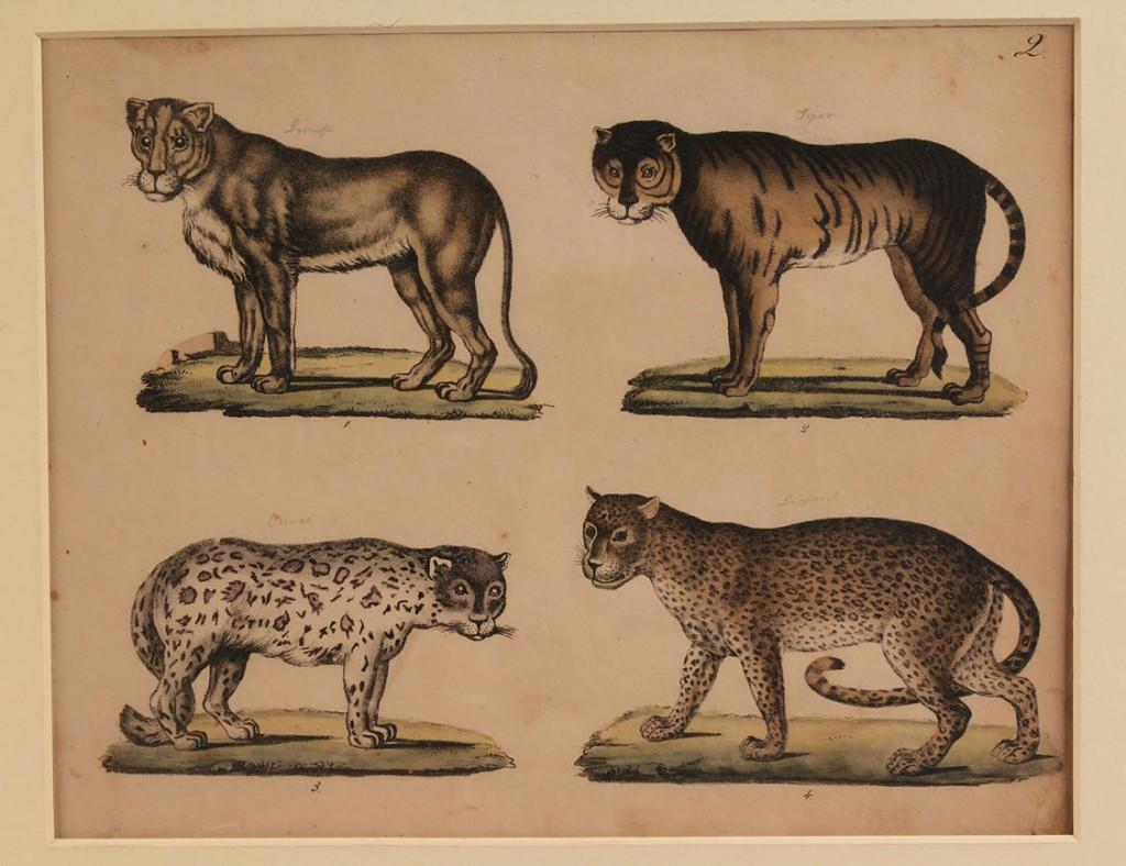 Lot 166: Three 19th Century Cat Engravings