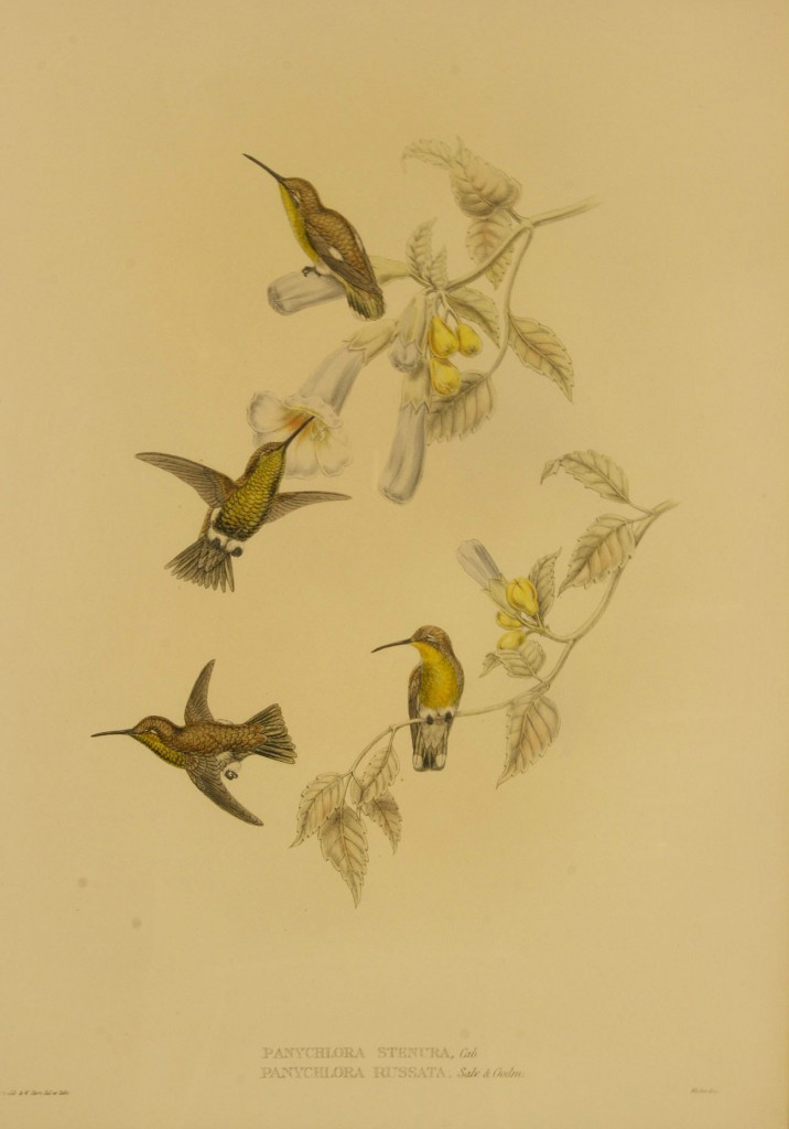 Lot 459: Gould & Hart Hummingbird Lithograph, 19th century