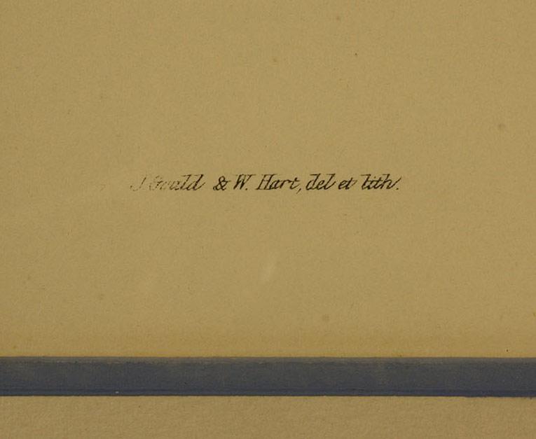 Lot 459: Gould & Hart Hummingbird Lithograph, 19th century