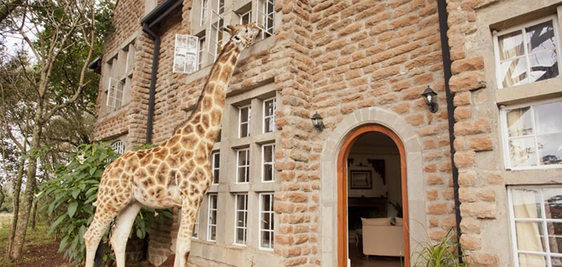 Foto cortesia do Giraffe Manor