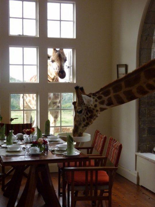 Foto cortesia Giraffe Manor