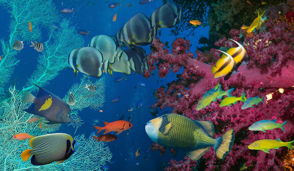 A Grande Barreira de Corais Australiana - Foto: Shutterstock - Tischenko Irina