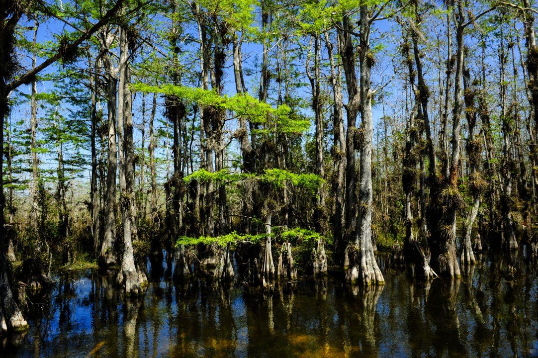 Everglades na Flórida - Foto: Shutterstock - Don Fink