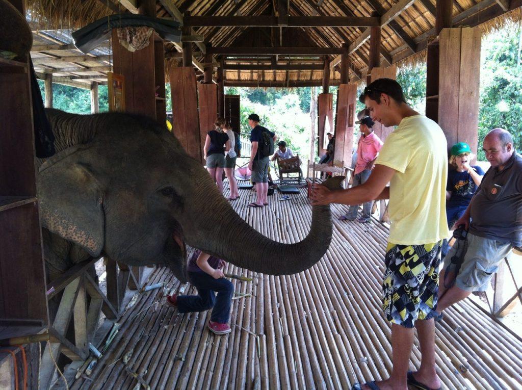 Alimentando elefantes - reprodução Elephant Village Sanctuary & Resort