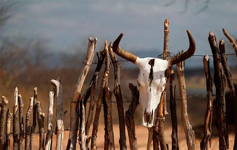 Apesar do castigo da seca, a autênticidade nordestina mantém a beleza do sertão intacta / Créditos: autor desconhecido
