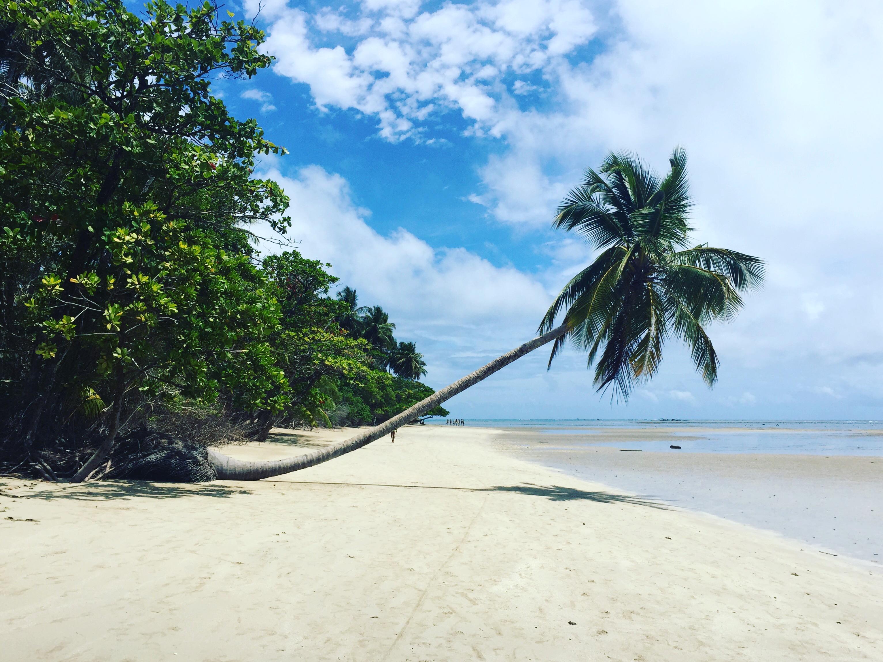 O coqueirão, um dos cartões postais de Moreré. Foto: Lalai Persson