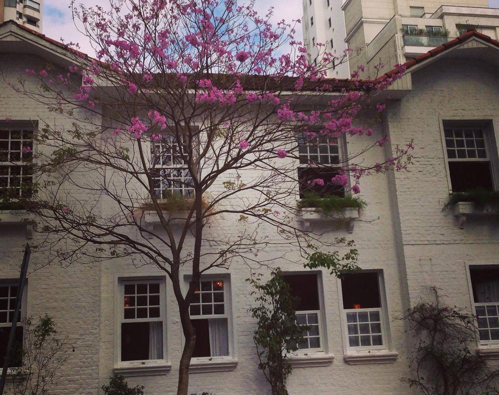 A casinha onde fica o Carlota - foto: divulgação