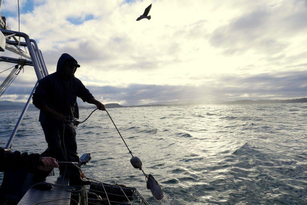 O uso de iscas para atrair os tubarões é uma das críticas à prática.