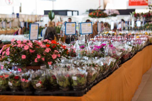 Garden Center Holambra - foto: Expoflora