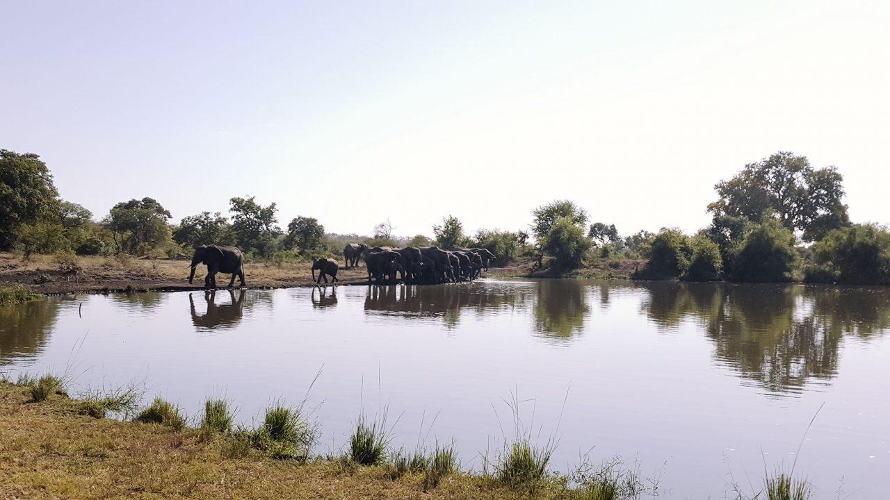 20160511_0933O lago em frente ao Singita é o ponto de encontro de diversos animais selvagens - Foto: Jo Machado