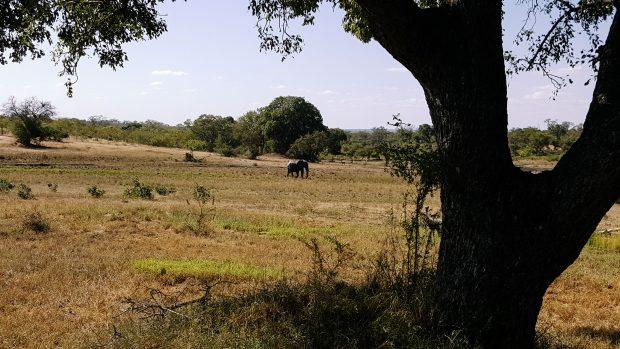Vizinhos selvagens transitam livremente pelos arredores do hotel - Foto: Jo Machado
