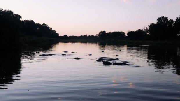 Final de tarde com os hipotótamos - Foto: Jo Machado