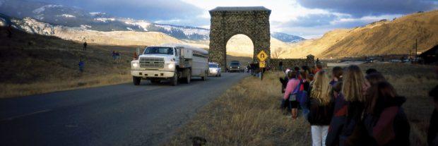Chegada dos lobos a Yellowstone em 1995 - foto: NPS