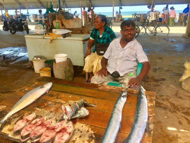 Mercado de peixes Negombo Sri Lanka