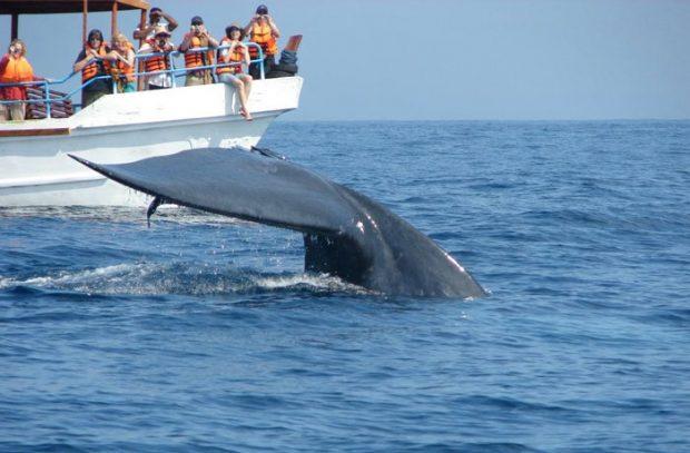 Baleias Azuis Mirissa Sri Lanka