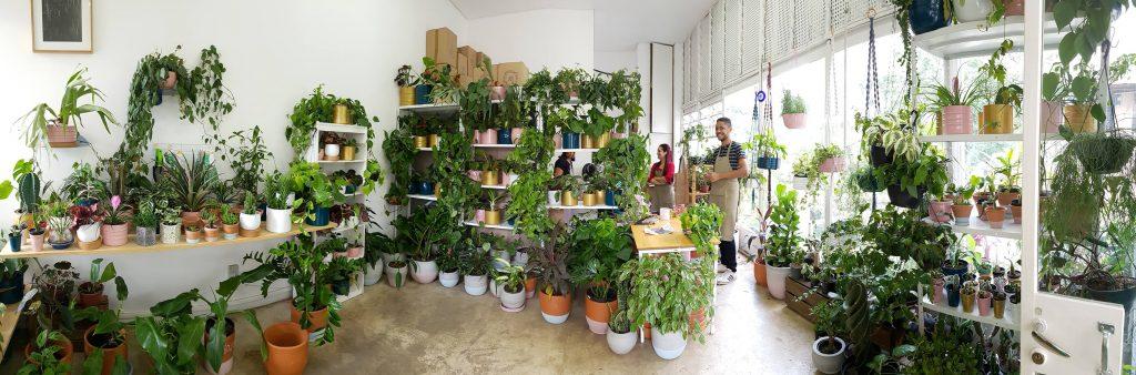 floriculturas e lojas de plantas em São Paulo