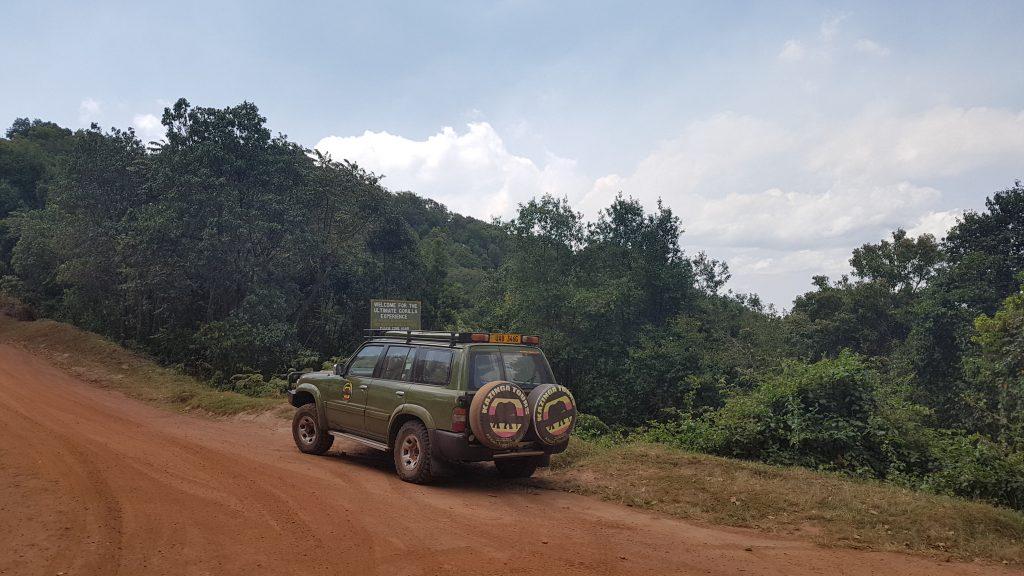 Uganda, Parque dos Gorilas