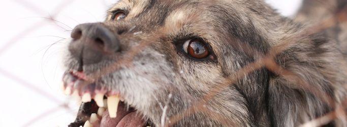 Dog Bite Attorneys for Lawsuit