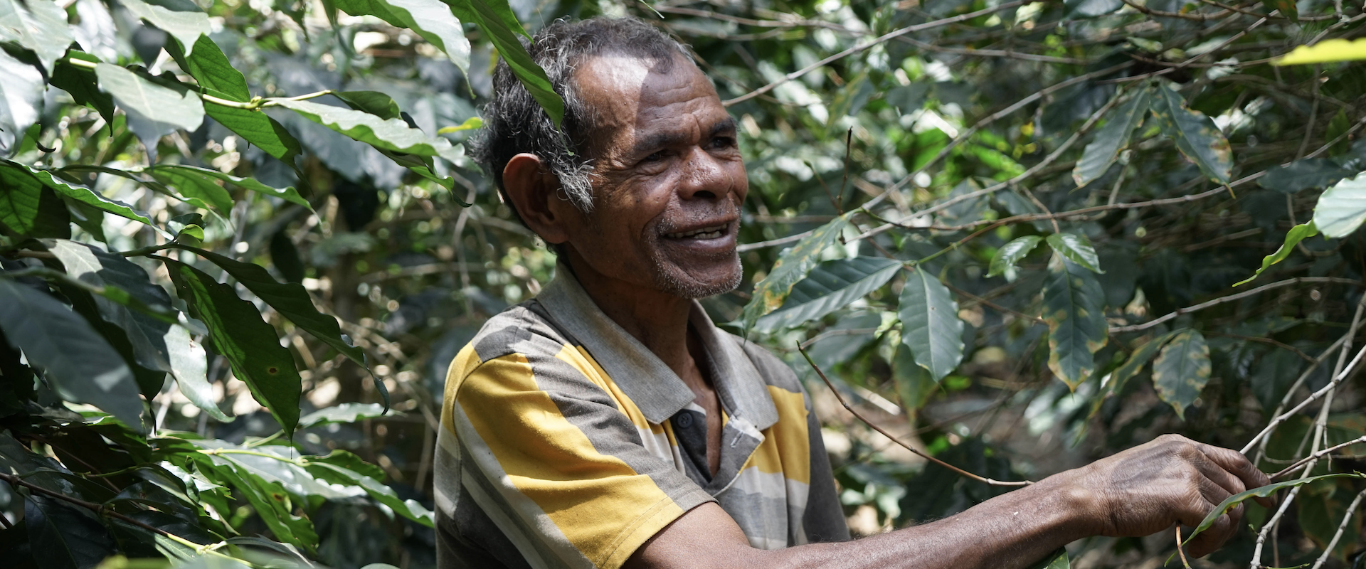 <strong>Timor Leste's</strong> National <span> Coffee Sector Plan </span>