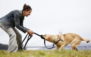 Cómo Hacer que tu Perro Responda a su Nombre