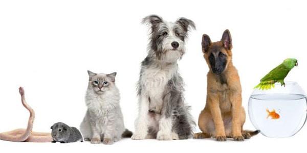 Como Escoger la Mascota Ideal