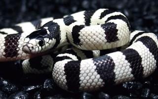 Como Cuidar una Serpiente
