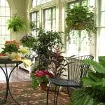 Decorar la Casa con Plantas