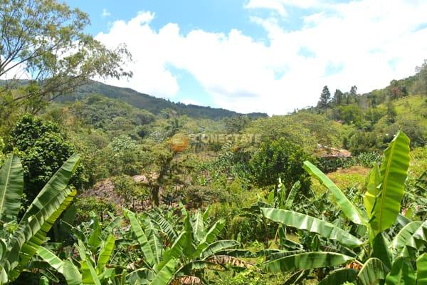 Rancho Arriba