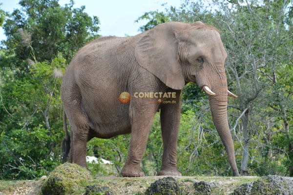 Elefante Zoo Miami