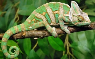 Cuidados de Reptiles Domésticos