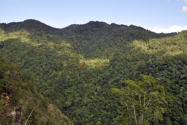 Reserva Científica Ebano Verde
