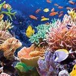 Cómo Proteger los Arrecifes de Coral