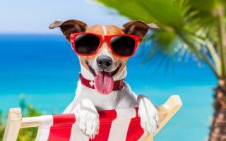 Cómo Cuidar a tu Perro en Verano