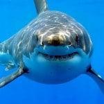 Mitos y Realidades sobre los Tiburones