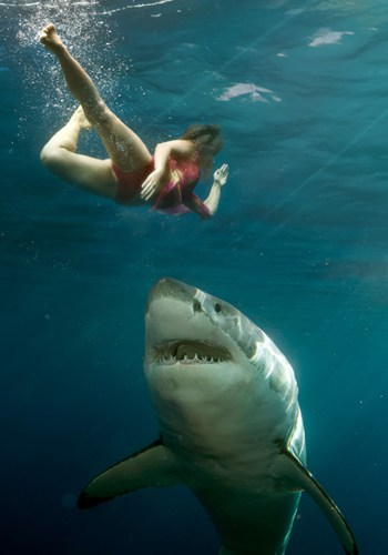 Como Evitar un Ataque de Tiburón