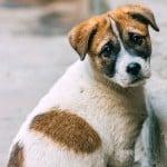 Día Mundial del Perro Callejero