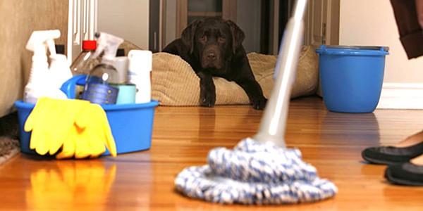 Como Eliminar el Olor a Perro