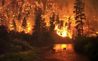 Que Hacer en Caso de un Incendio Forestal