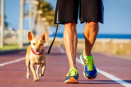 Beneficios de Pasear al Perro