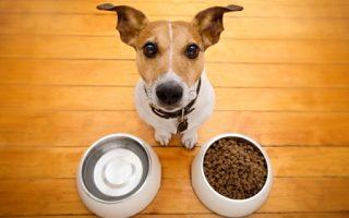 Cómo Alimentar a tu Perro